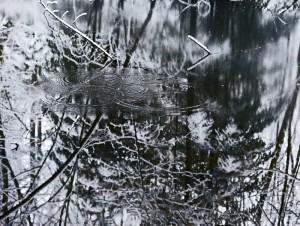 Ice Sihlwald