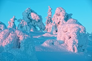 Farytail Snow